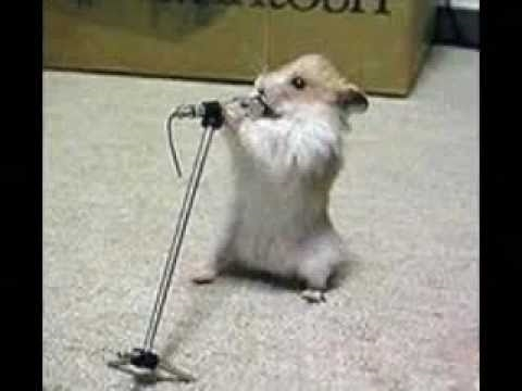 Funny hamsters singing