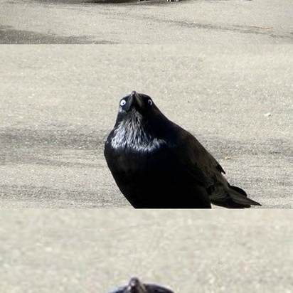 Do_you_even_lift_crow_WTF