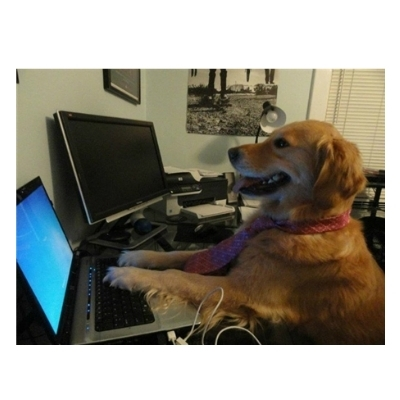 No Computer Idea Dog