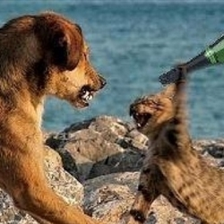 cats v dogs