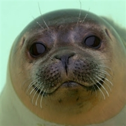 Homophobic Seal of Approval