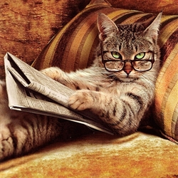 cat reading the newspaper