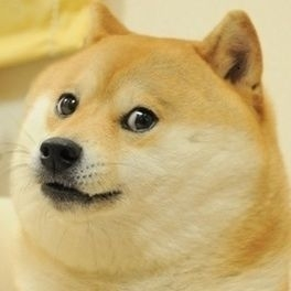 wow such doge1