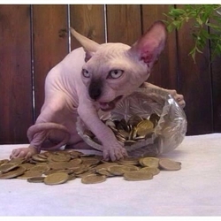 Greed Cat
