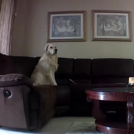 Couch dog