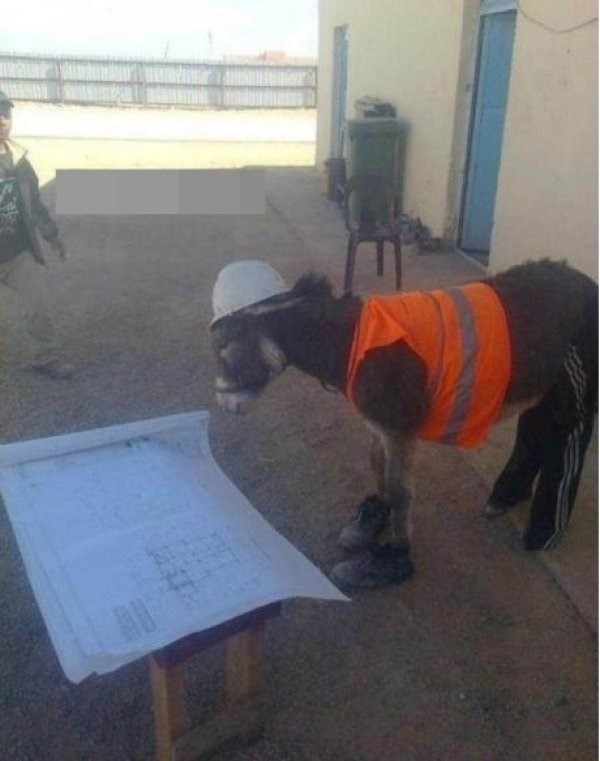 Construction Donkey