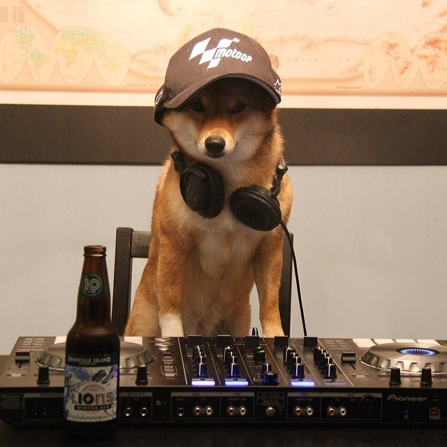 Dubstep Dog
