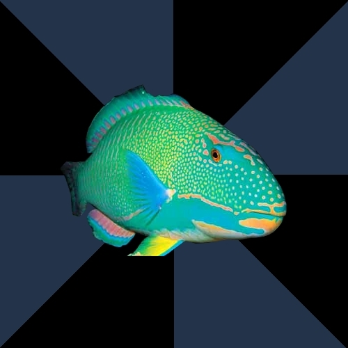 Trans Parrot Fish's Significant Other
