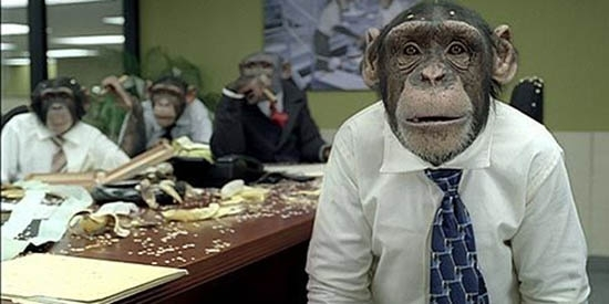 monkey meeting