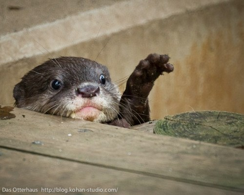 I need dis otter