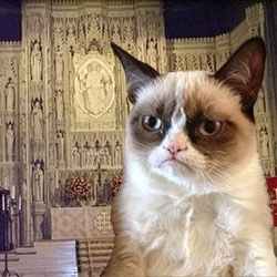Grumpy Episcopal Cat
