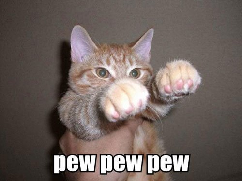 Funny Cat Meme Generator : Funny cat fighting meme generator