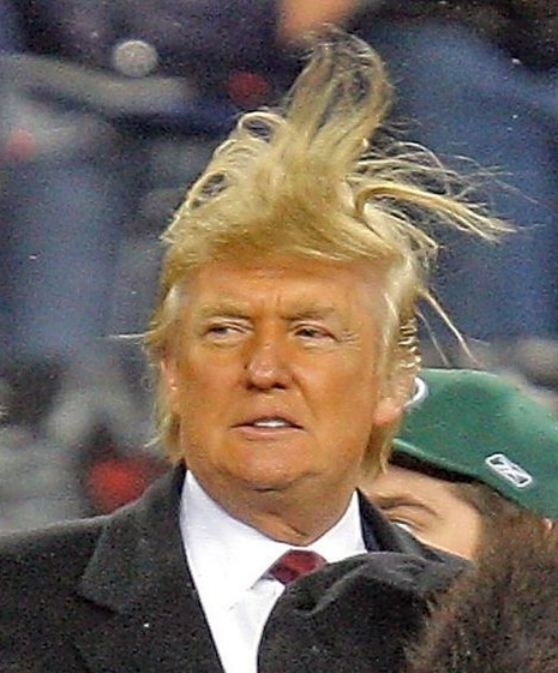 Image result for DONALD TRUMP WILD HAIR