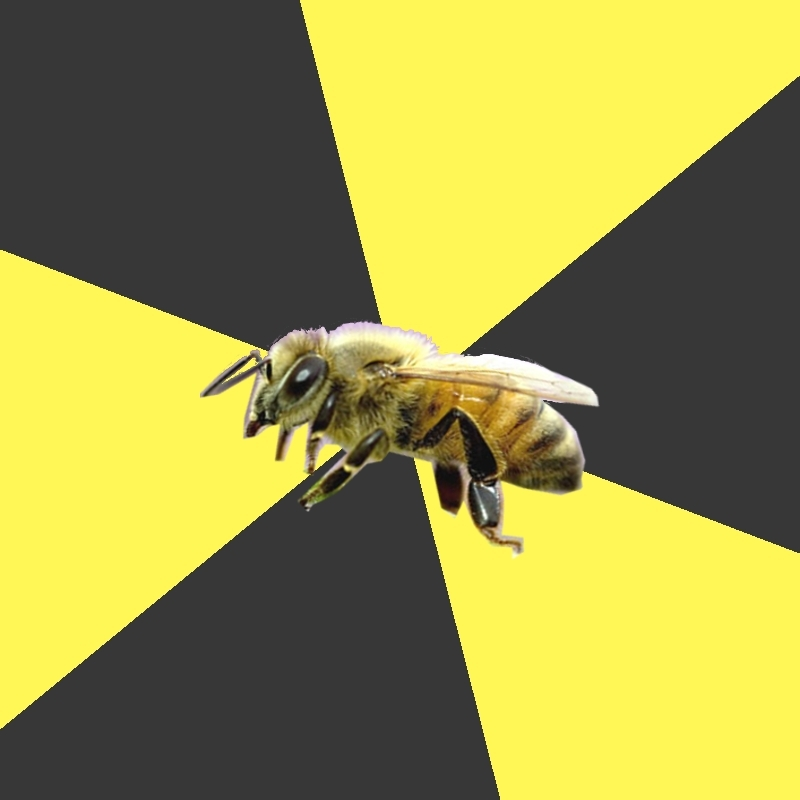 British High School Honeybee