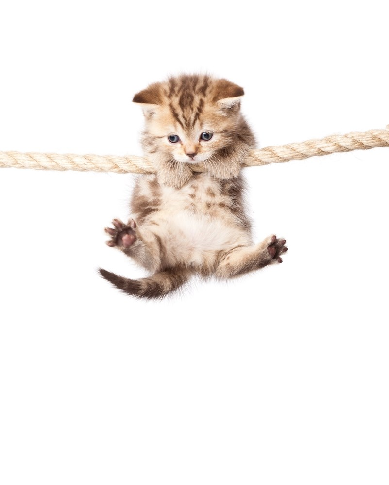 Hang In There Kitty Cat