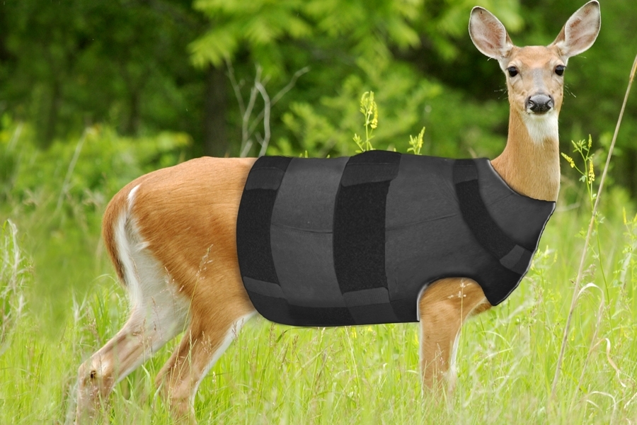 Deer in Bulletproof Vest