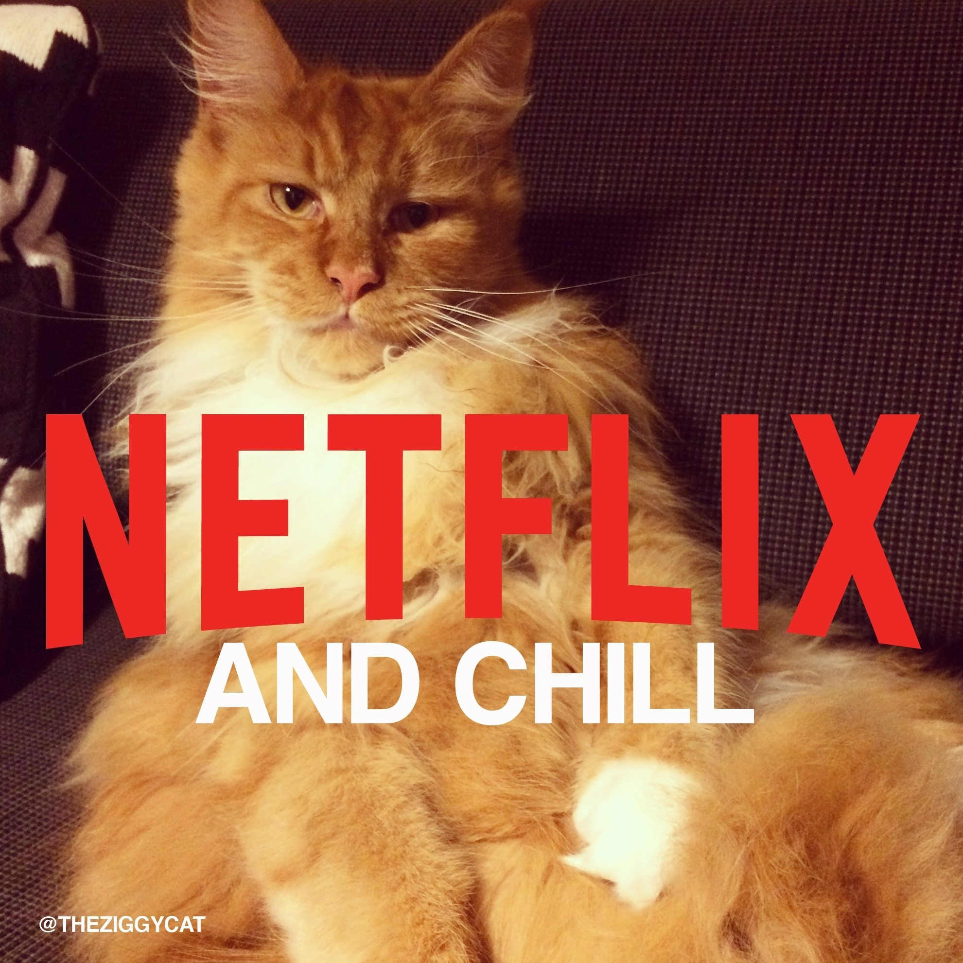 Cat Video Netflix And Chill