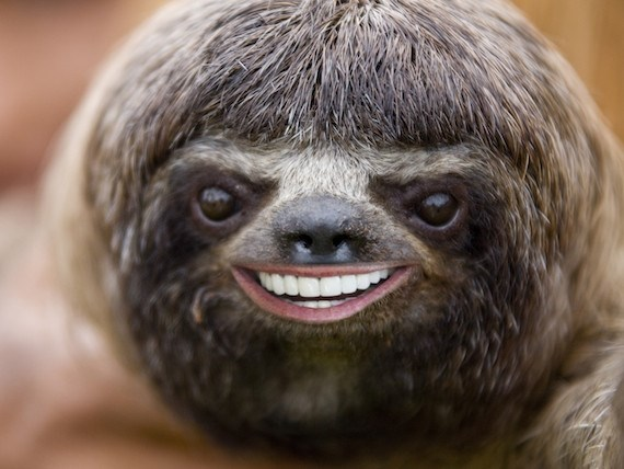happy sloth happy sloth meme generator