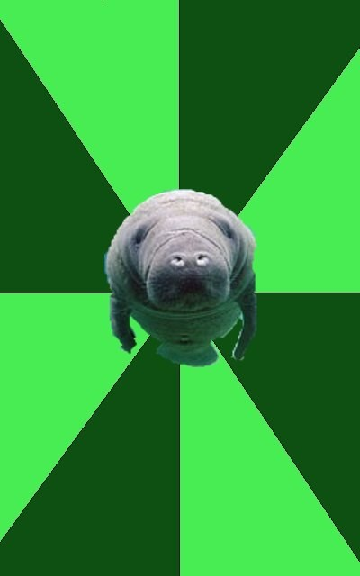 Marching Band Manatee