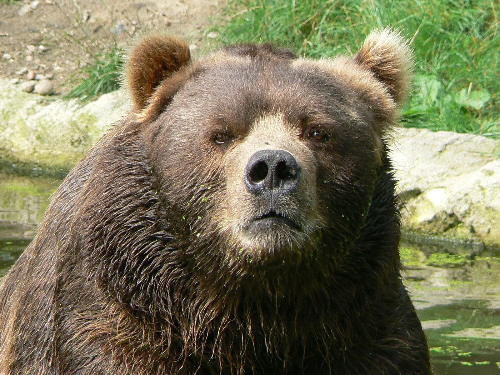 Overly Intense Bear