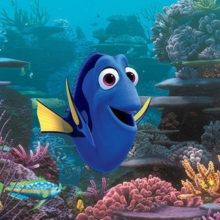 Distracted Dory