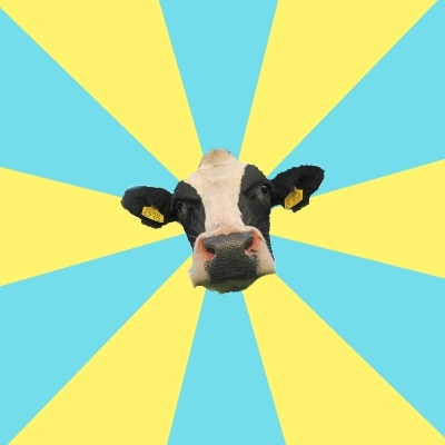 Comparatist Cow