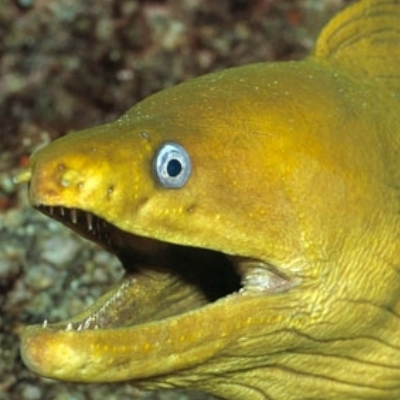 Punch Line Eel