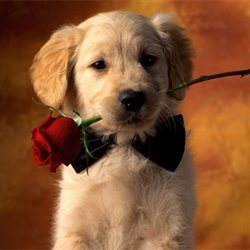 cute dog with roses