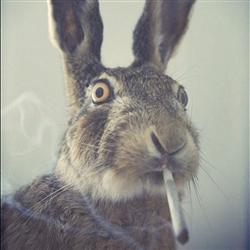 4/20 Easter Bunny
