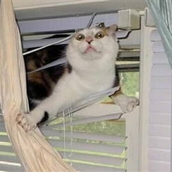 Did someone say cat