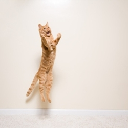 super excited cat jumping