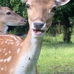 You Don't Say - Deer