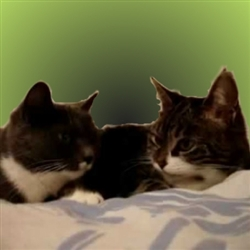 Two Talking Cats