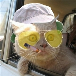 Fear and Loathing Kitty