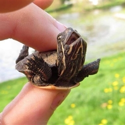 excited turtle