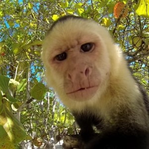 the fuck you looking at monkey