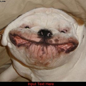 Hilarious smiling bulldog