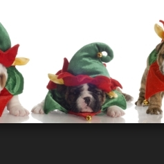 3 bulldog Elves