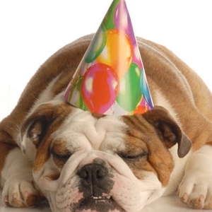 Birthday Hat Bulldog