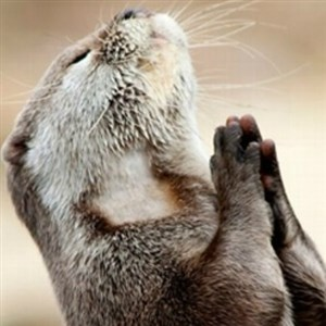 Praying Otter