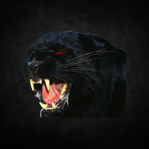 Roleplay Panther