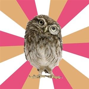 Eating Disorder Owl