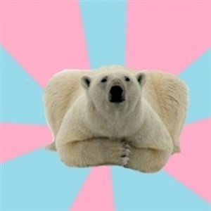 Perfection Polar Bear