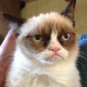 Mr angry cat