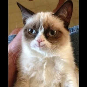 Smiling grumpy cat is real