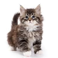Cute and Deadly Kitty