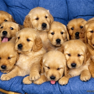 There's always one puppy
