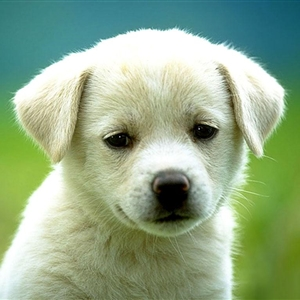 Cute Dog with face