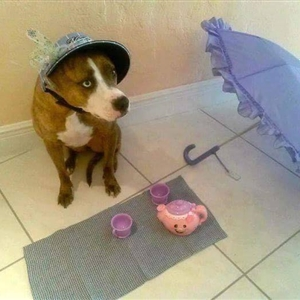tea time for doggy