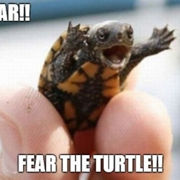 fear the turtle